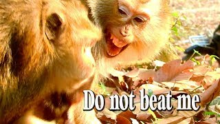 Monkey Teresa cries scared Diamond no let her hug baby Dustin and beats her