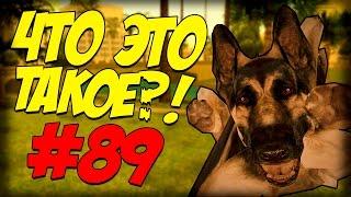 Обзор Модов GTA San Andreas #89 Жизнь собаки (Жесть!)