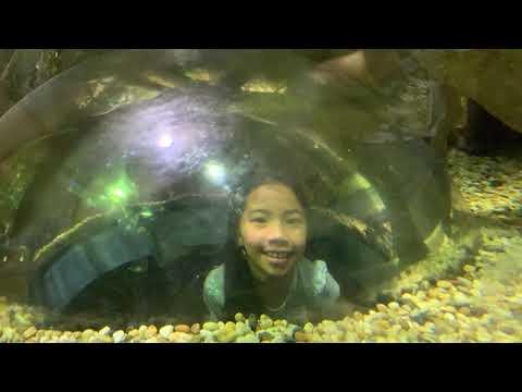 #14 Dubai Aquarium-Dubai Mall
