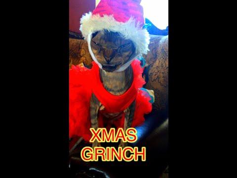 SPHYNX CAT STEELS CHRISTMAS.