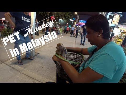 Pet monkey in Malaysia?!
