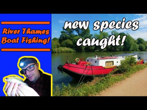 RIVER FISHING| Boat Fishing On The RIVER THAMES!