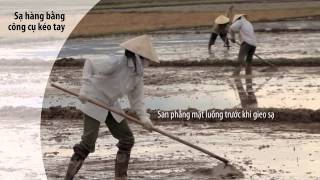 System of Rice Intensification (SRI) (Vietnamese version)