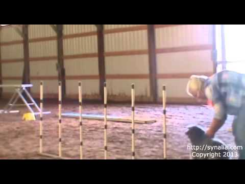 SATS Training: Teaching a dog to weave poles, 1st & 2nd Attempt