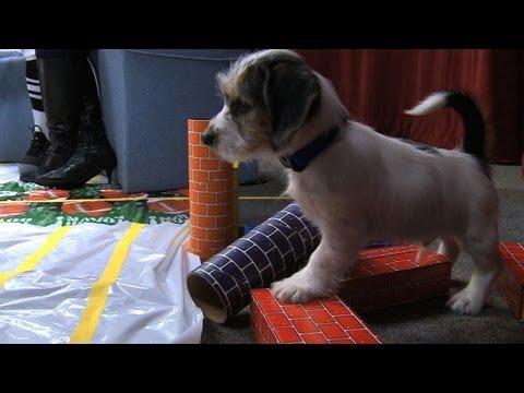 Off Duty: Cee-Lo Green, Super Bowl XLVI and Puppy Bowl VIII