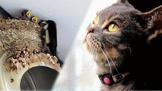 ツバメを朝から夕方まで監視する猫たち。 その様子を眺めて幸せな気持ち...