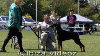 "Romsey Kc ""best In Show"" Dobermann - Judge: Miss Bev Danes (nsw) [short Version]"