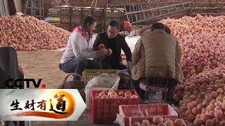 《生财有道》 20200107 陕西白水:苹果飘香 致富一方| CCTV财经