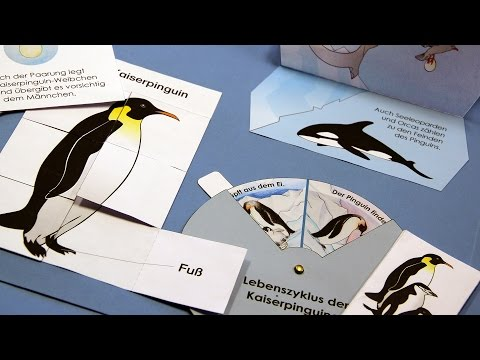 Pinguin Lapbook