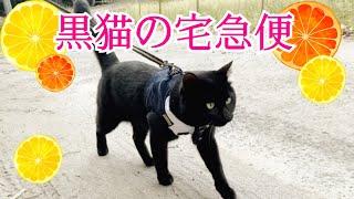 パトロールついでにミカンをお届けするニャ Walk my cat and dog