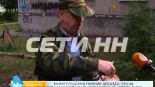 """Грибной сезон в """"каменных джунглях"""" - собирать грибы не отходя от дома можно в Нижнем Новгороде"""