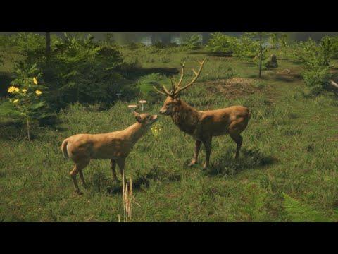 Polski Symulator lasu i zwierząt leśnych - Natural Instincts / 02.06.2020 (#5)