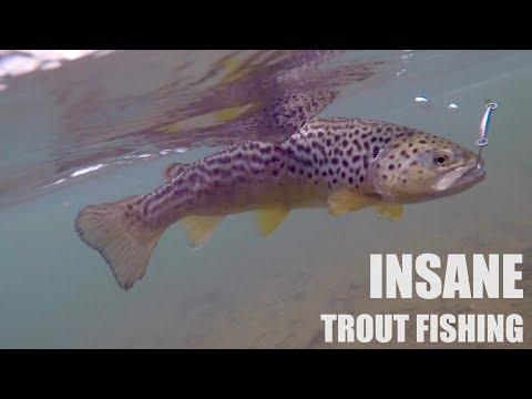 ABSURD TROUT FISHING CHALLENGE!!! (Surprise Ending - Underwater)