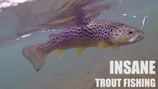 ABSURD TROUT FISHING CHALLENGE!!! (Surprise Ending - Underwater)