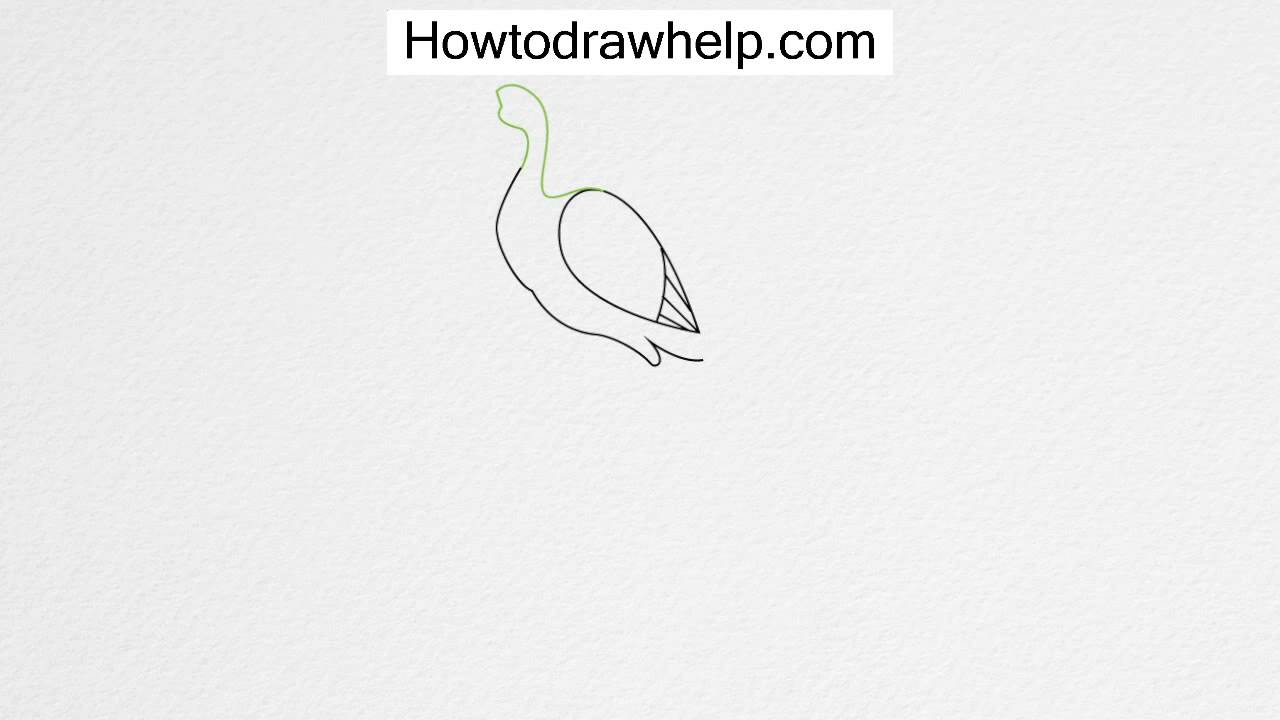 how to draw a peacock step by step for kids youtube