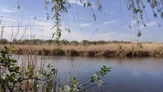 Скачать бесплатно футаж. Весенний футаж - река. Футаж для видеомонтажа.