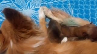 Шок !!!  собака родила 2 щенят