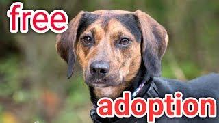 Free adoption dog available