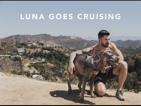 """""""LUNA GOES CRUISING"""" - ADORABLE DOG SEEKS BOYFRIEND"""