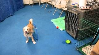 MVI Sandy Adopted Mill Dog