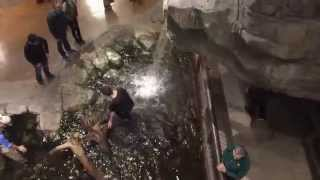 Public Humiliation: Guy goes swimming in Bass Pro Shop (What are the Odds)