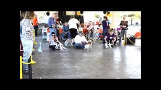 Cavalier King Charles Spaniel Club Of Greater Houston