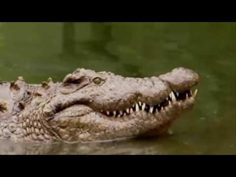 Cá Sấu || Thổ Dân Châu Phi Ban Đêm Xuống Hồ Săn Cá Sấu Và Cái Kết Đắng Lòng