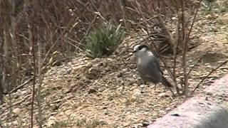 Birds & More: Alaska & Attu