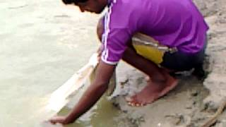 PRAWN FISHERY PURBAMIDNAPUR WEST BENGAL INDIA OWNER Mr  ANUP KUMAR MAITY