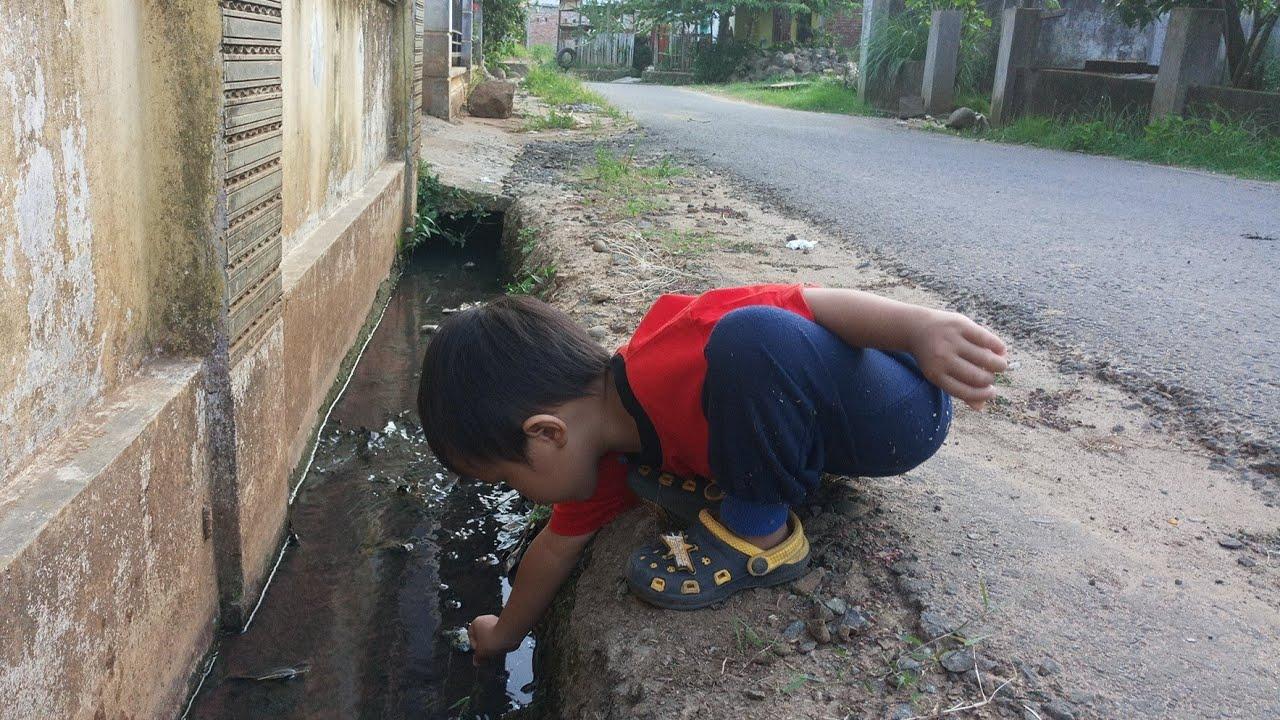 Cacing Sutera Banyak Di Selokan Depan Rumah Warga By Rinto Rigon
