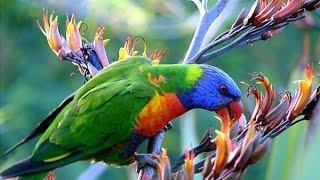Самые красивые животные и птицы мира.
