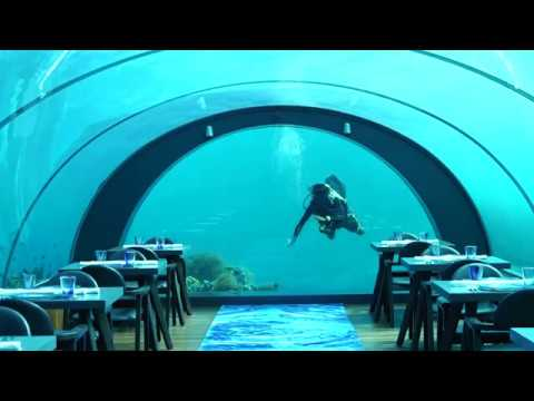 Video: Underwater Gourmet