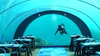 Cool Escapes Maldives: Cuisine Artist Bjoern Van den Oever at 5.8 Undersea Restaurant