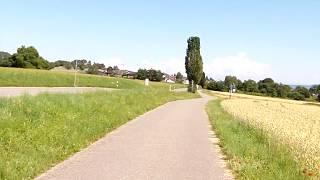 Weizenfeld am Bodensee