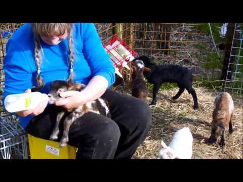 10 Pack Goat Nipple Baby Pup Lamb Dog Cat Pet Milking Soft Teat Replacement