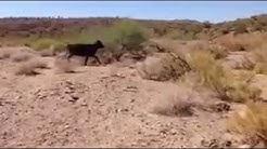 Arizona desert alien creature.