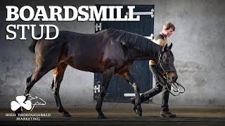 ITM Irish Stallion Showcase 2021 - Boardsmill Stud