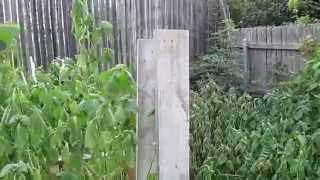 Backyard Aquaponics Planning And Backyard Tour. Oct 3 2014 Fort Worth Tx