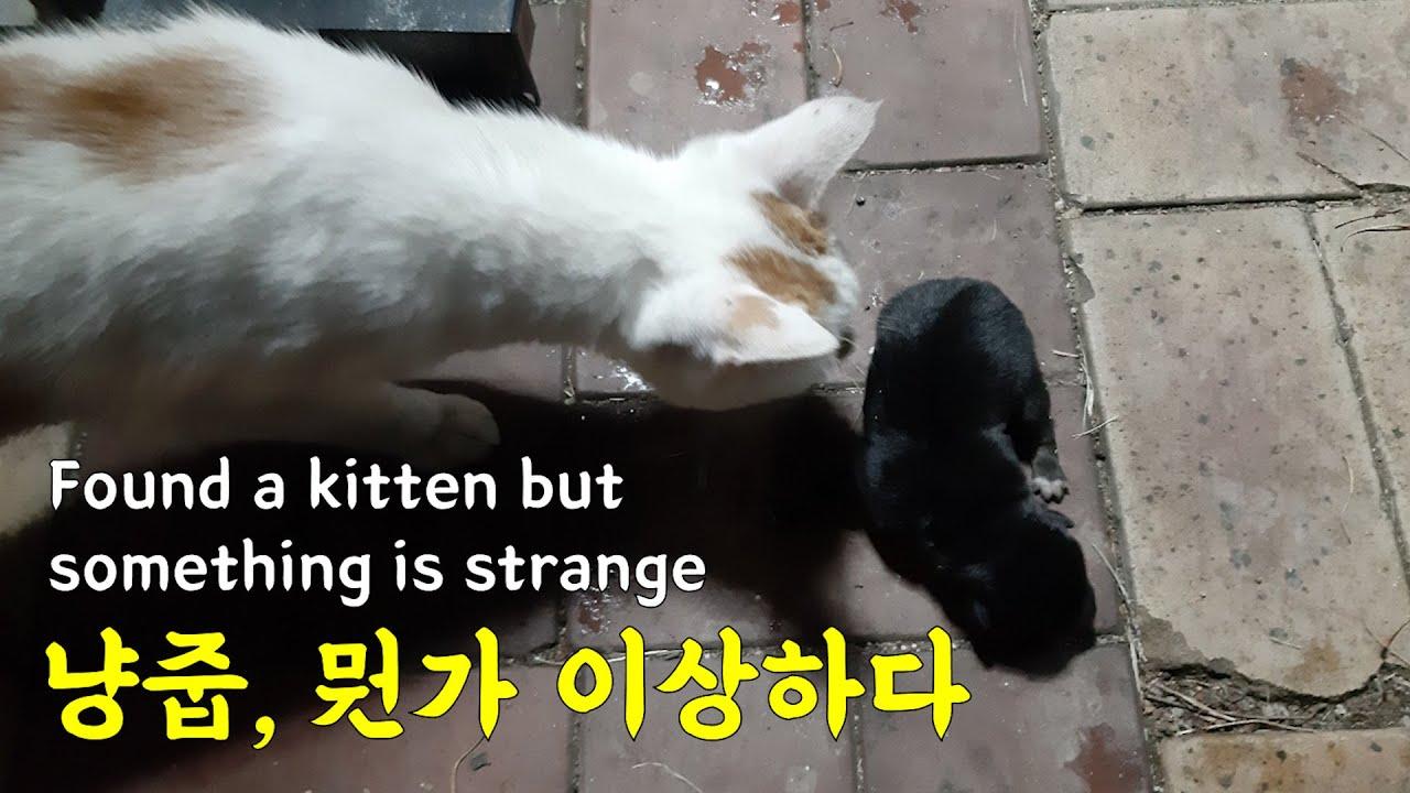옆 주민이 새끼고양이를 주웠다, 근데 뭔가 이상하다