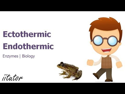 √ Physiological and Structural adaptations of ectotherms and endotherms   iitutor