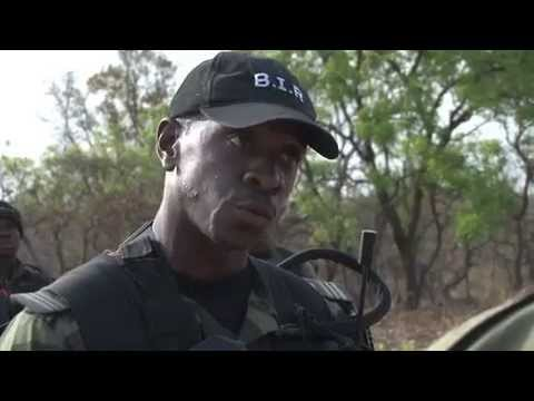 Military Respons to 2012 Bouba Ndjida Elephants Massacre B Roll   Wi Fi