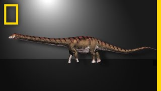 list of biggest dinosaurs
