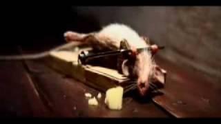O rato e a ratoeira