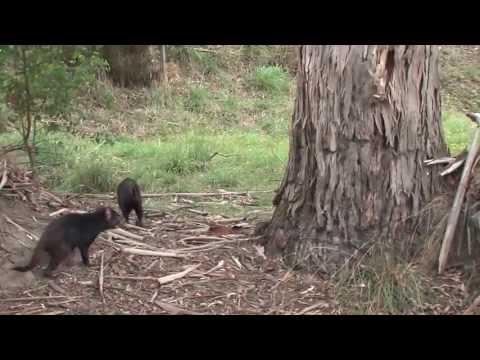Introduction to Hobart and Maria Island, Tasmania