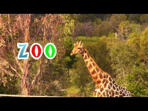 ZOO for Kids