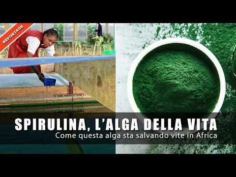 Spirulina, l'alga della vita