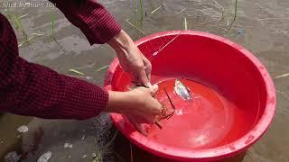 Miền tây | giăng câu thả lưới bắt cá mùa nước nổi đơn giản lắm | miền tây travel | fishing