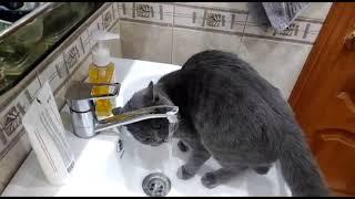 Я  и кот Бандэрос Пьет воду с крана, очень очень боится перчатку