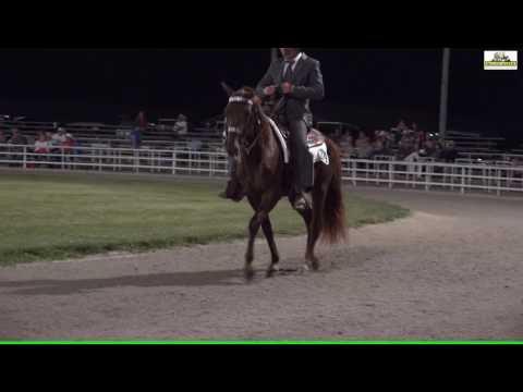 Missouri Fox Trotter - MFTHBA Futurity 3 Years 2016 open Finale