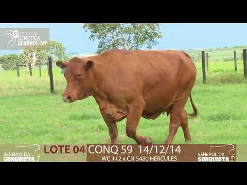 LOTE 04 CONQ 59